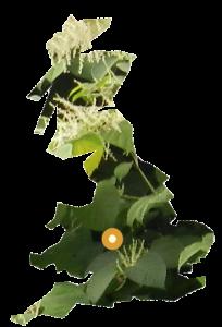 PLR Ltd UK Japanese Knotweed Eradication in the UK - our Birmingham office