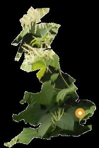 PLR Ltd UK Japanese Knotweed Eradication in the UK - our East Anglian office