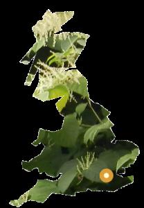 PLR Ltd UK Japanese Knotweed Eradication in the UK - our London office