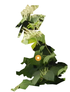 PLR Ltd UK Japanese Knotweed Eradication in the UK - our Warrington office