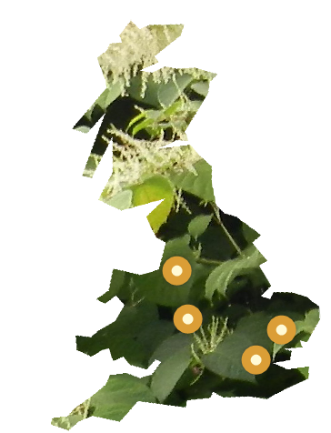 PLR Ltd UK Japanese Knotweed Eradication in the UK - our office locations