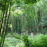 PLR Ltd - Cemetery similar to the one that is being cleared of Japanese knotweed