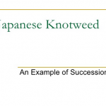 Japanese knotweed slide show - make sure you get the pros in to clear it - PLR Ltd - 0207 042 6450