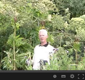 PLR Ltd - Identification of giant hogweed - guest video by Irish Angling Update